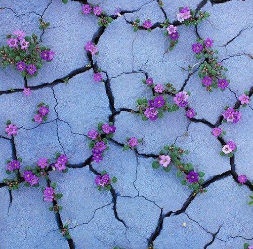 Plants growing through concrete walls, stones and asphalt