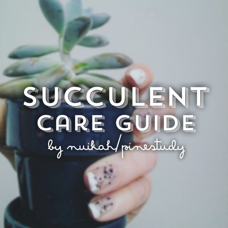 Succulent Guide Congratulations on becoming a proud plant parent! Welcome to to the wonderful world of succulents and cacti, here is a small guide of how to take care of your succulents properly and...