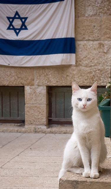 Israel. Many cats now (never mentioned in the Bible)
