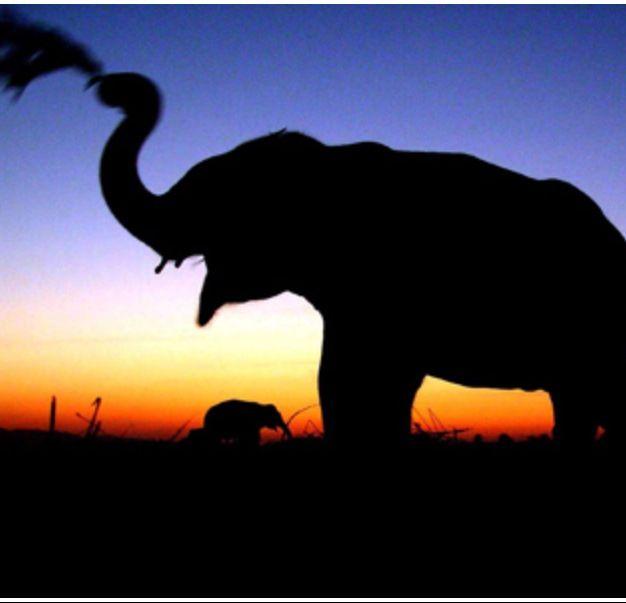 Elephant - National Geographic India