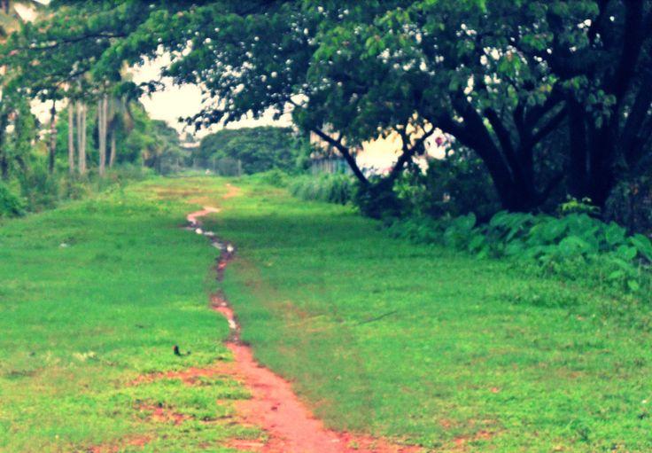 Natural - Man made vibrant way,  Pleasure walk.