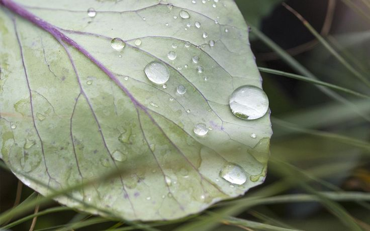 "Tra le foglie di ""Una Dalia di Velluto blu"""