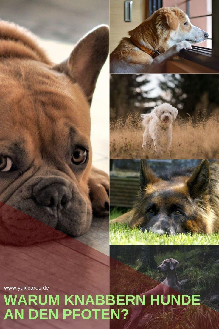 Hund Knabbert An Pfoten Warum Was Kann Ich Tun Hunde Hundeverhalten Hundebaby