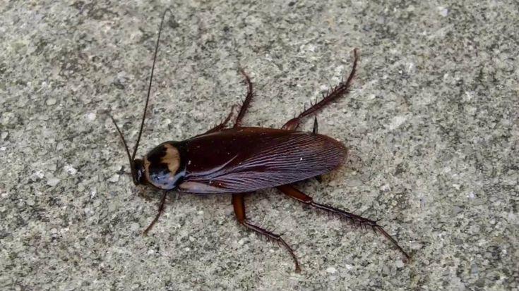 Are Palmetto Bugs Roaches? Palmetto bugs, Bugs, Cute animals