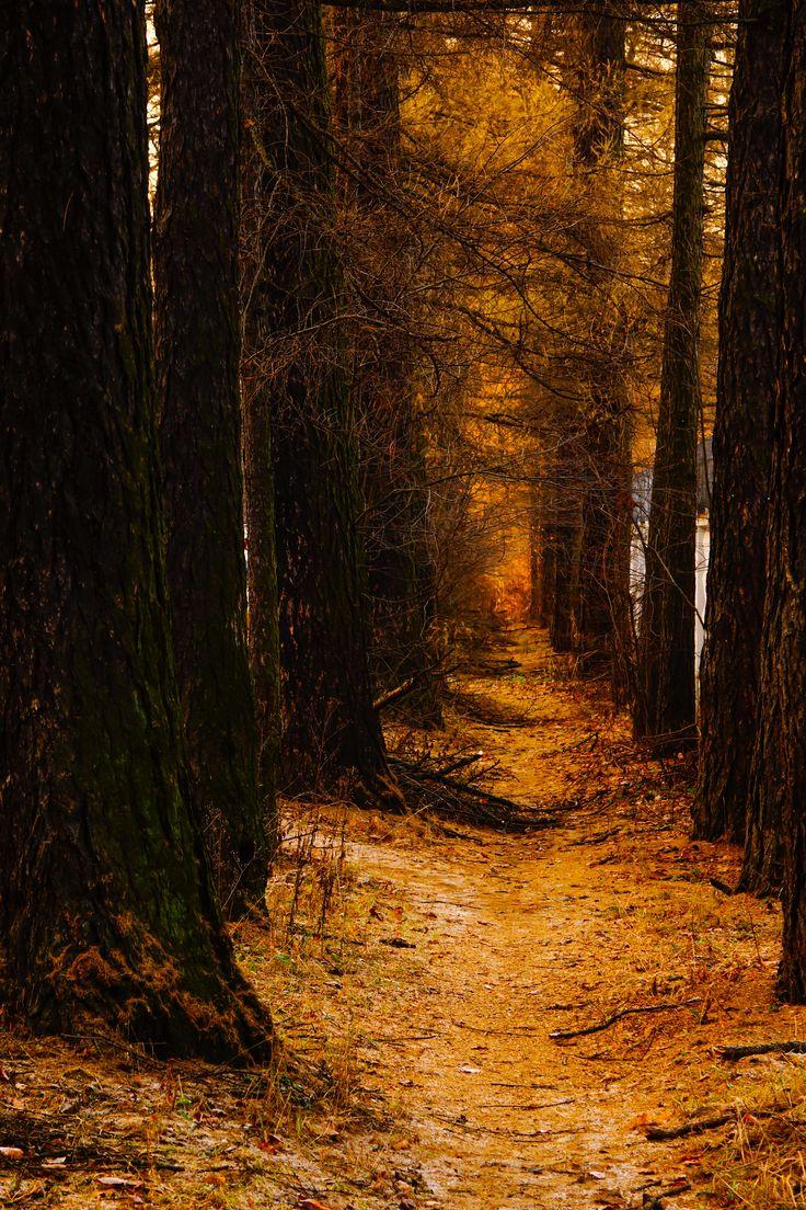 Парковые аллеи осенью
