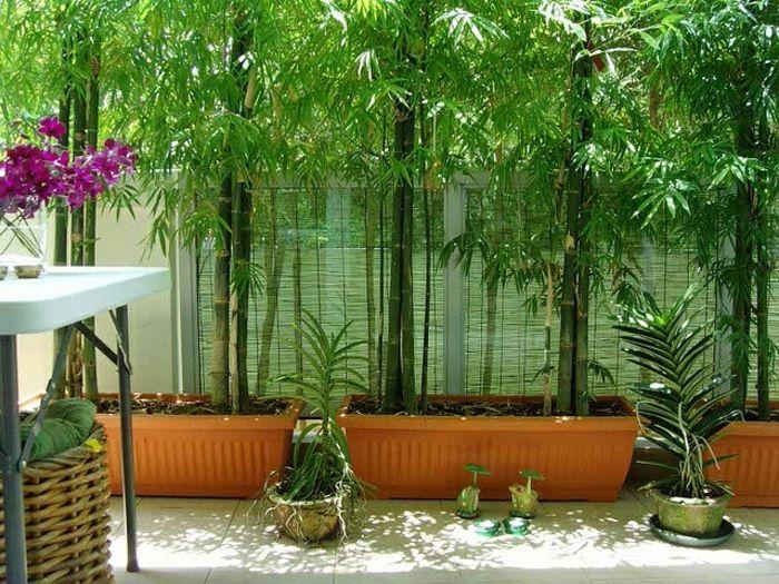 25 Best Ideas About Bambou En Pot On Pinterest Equisetum Bac 2013 And Queue De Cheval Originale