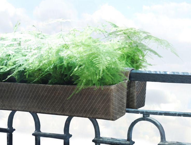 Plantes rebords