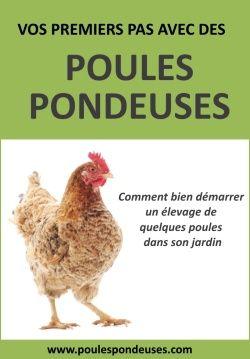 PDF Gratuits: Guide gratuit : Vos premiers pas avec des poules pondeuses (PDF)