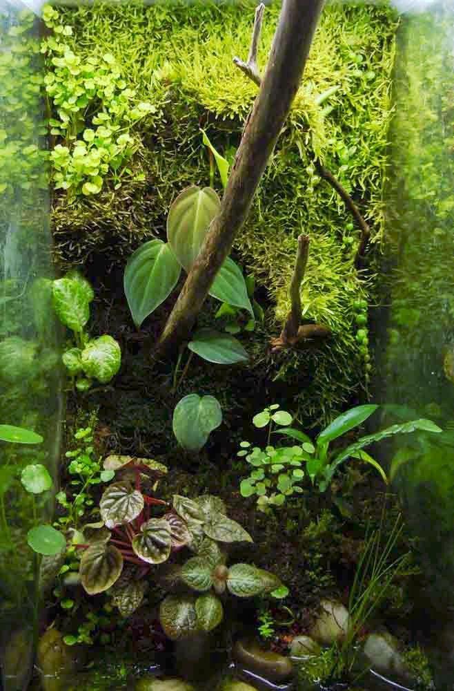 Living Background Terrarium Clay Vivarium Poison Dart Frog Reptile Insect Mantis   eBay