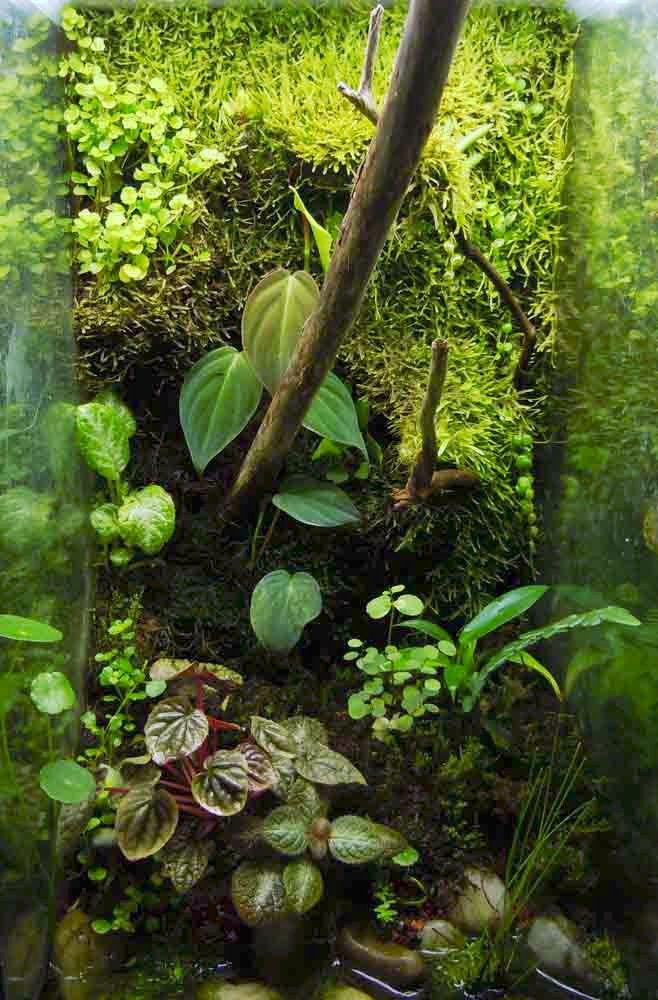 Living Background Terrarium Clay Vivarium Poison Dart Frog