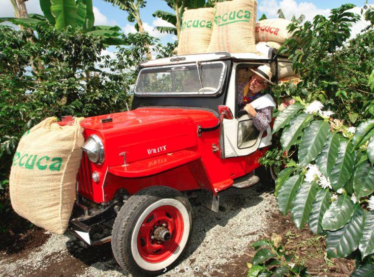 HACIENDA CAFETERA RECUCA: TRADICIÓN, CULTURA, HISTORIA Y DIVERSIÓN EN UN SOLO LUGAR!  Viva una experiencia única en la Hacienda Recuca, lugar en el que usted también puede ser caficultor y pasar un día disfrutando de una verdadera vida cafetera.  Conozca las diferentes etapas del cultivo mientras recorre el campo disfrutando de los inigualables olores y sabores que solo ofrece el Quindío con su café único y un delicioso almuerzo campesino.