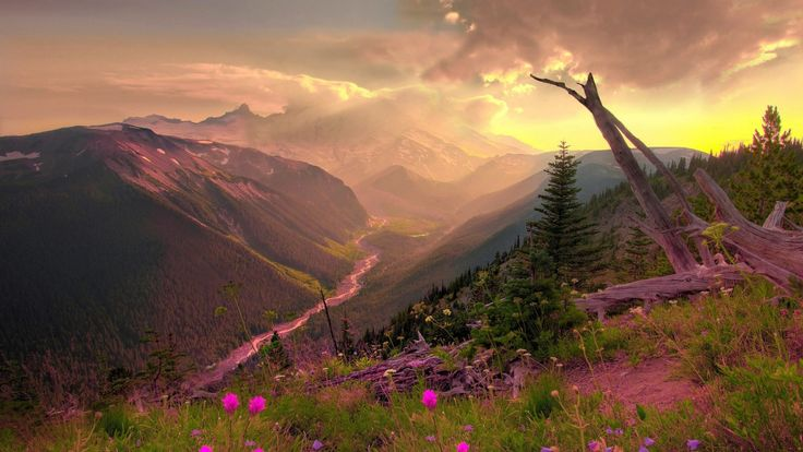 clouds-nature-sun-trees-flowers-pink-wildflowers-1920x1080-hd-wallpaper