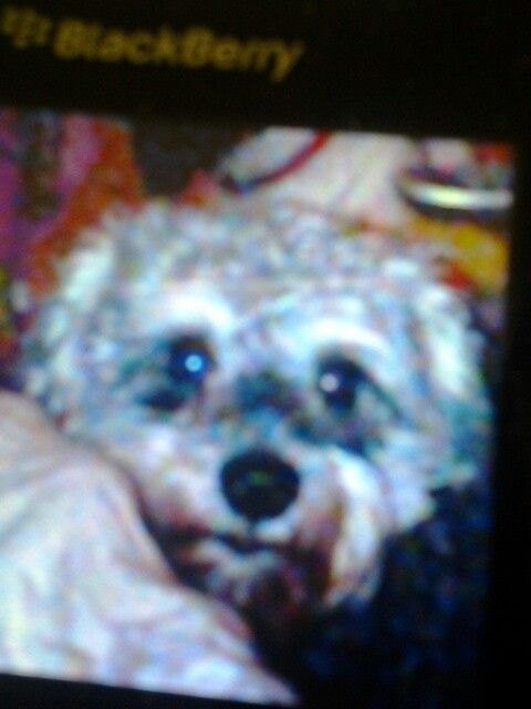 Old photo of sparky, he looks so cute!!! ♡♥♡♥☆★☆★