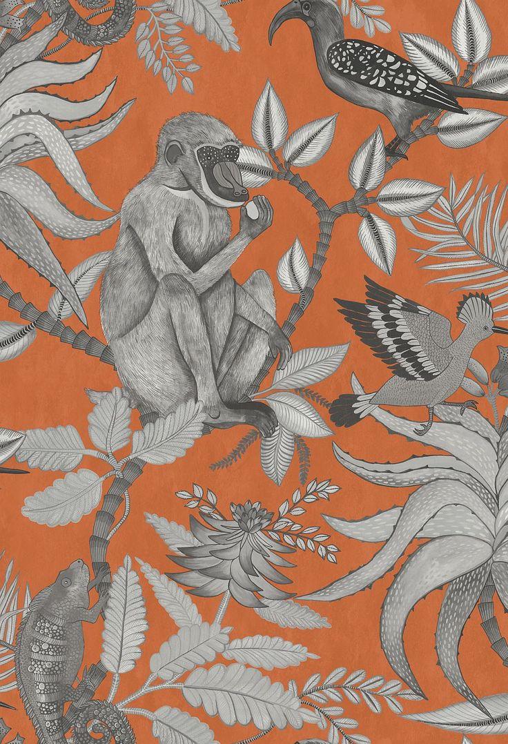 Best 25 Monkey Wallpaper Ideas On Pinterest Arctic