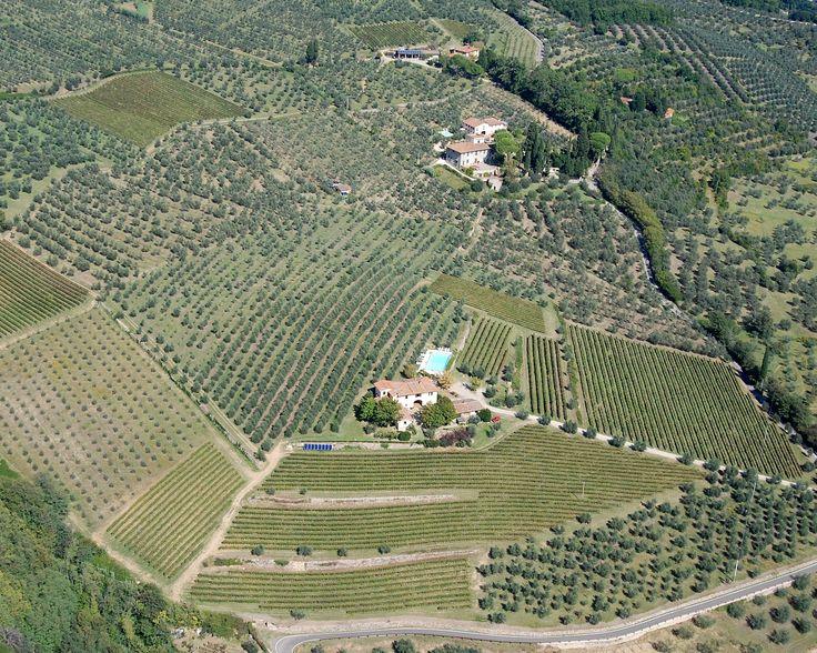 Vuoi assaggiare dell'ottimo vino e del gustosissimo olio in #Toscana? Sulle colline fiesolane si trova la Fattoria di Poggiopiano, con 17 ettari di vigneti ed oliveti a 150 metri di altezza, una conduzione agronomica a basso impatto ambientale. Vieni a trovarci! http://bit.ly/1LpglXL  Poggiopiano Farm: 17 hectares of vineyards and olive groves to 150 mt. http://bit.ly/1VM1pcW