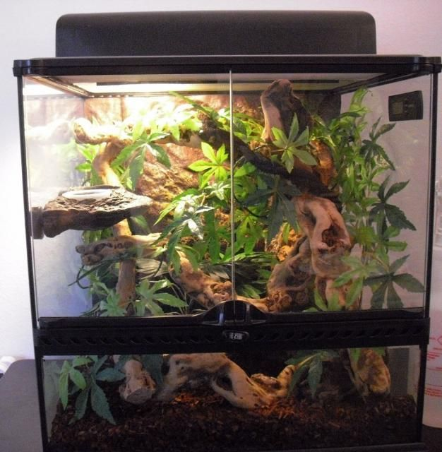 A vivarium for Crested Geckos built  by one of our customers!
