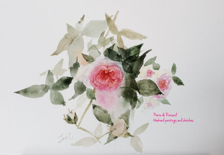 Pierre de Ronsard 2 At Nakanoshima Rose Garden. Watercolours Paper: Winsor & Newton COTMAN 227 x 158mm