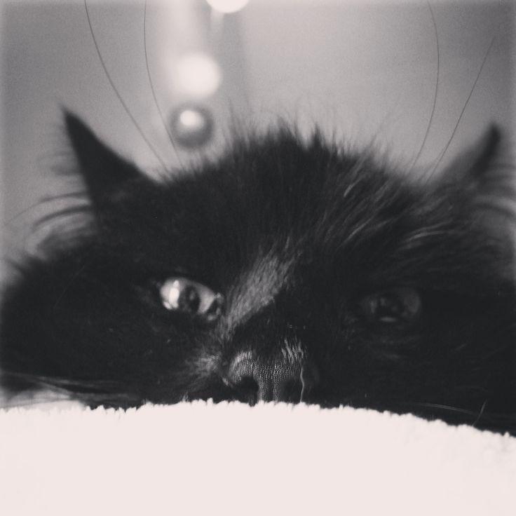 Mr Czesław:) Wild sweet little creature:)