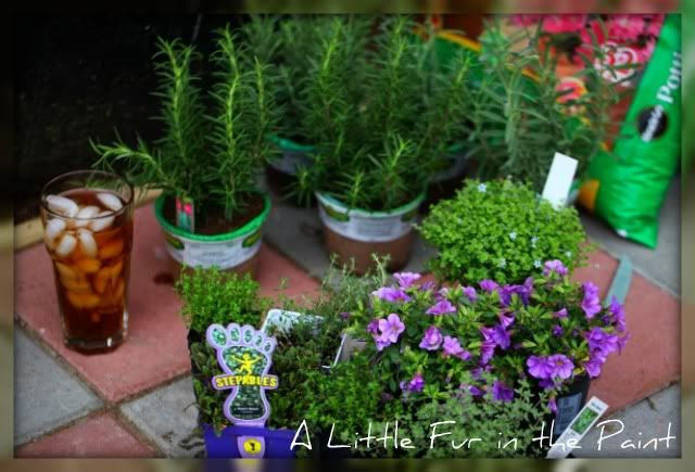Some choices of tiny-leaved plants for fairy gardens
