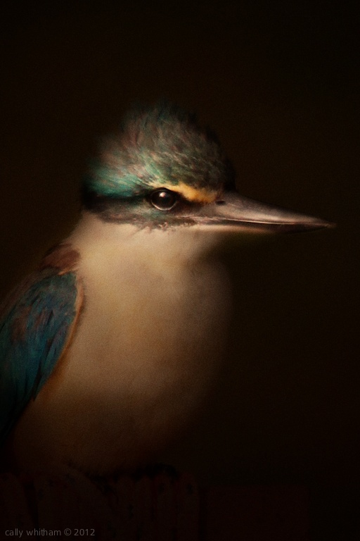Here is a wonderful 'crepuscular' (dusky evening light) Renaissance painting effect applied to New Zealand native & endemic birds by Cally Whitham.