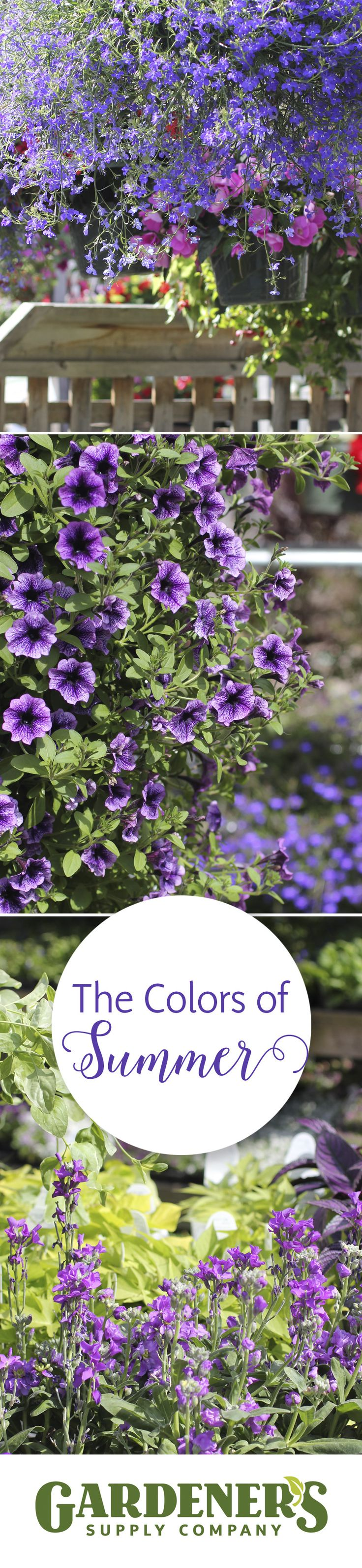 Pin by gardener 39 s supply company on gardener 39 s supply for Garden supply burlington vermont