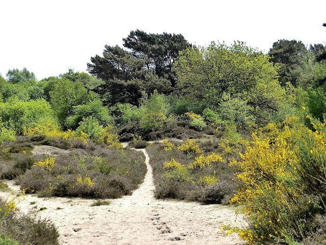 Wandelen bij Havelte (Drenthe)