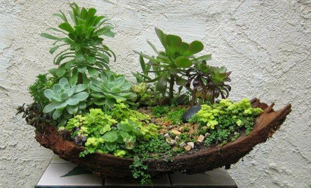 un jardin miniature avec des plantes succulentes