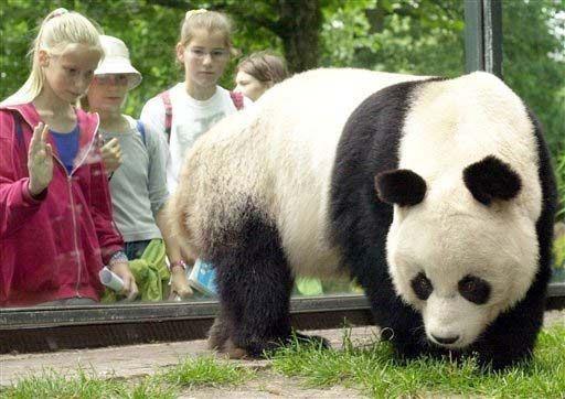 Muere uno de los pandas gigantes más viejos del mundo