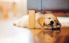 Image result for puppy full background image
