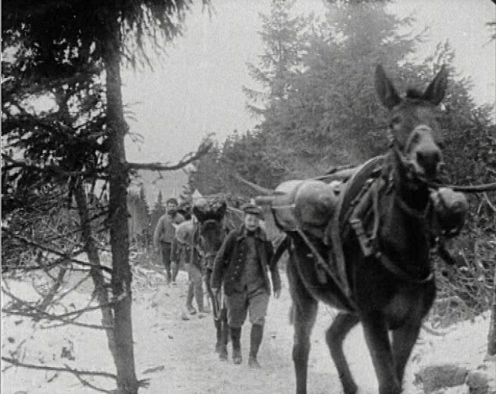 This image from World War I shows mules transporting aerial torpedoes through the Argonne Forest in France. They are being led by French troops.  Mules along with horses were vital on the Western Front. They had extraordinary stamina even in severe weather conditions. They were often the only means of getting supplies to the front and getting guns and torpedoes moved from place to place through difficult terrain.