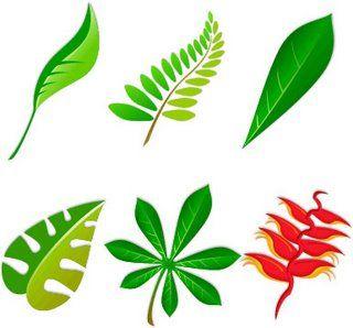 47 best images about hojas on pinterest papier mache for Arboles de hoja caduca