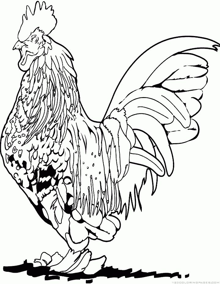 Roosters Coloring pages and Coloring