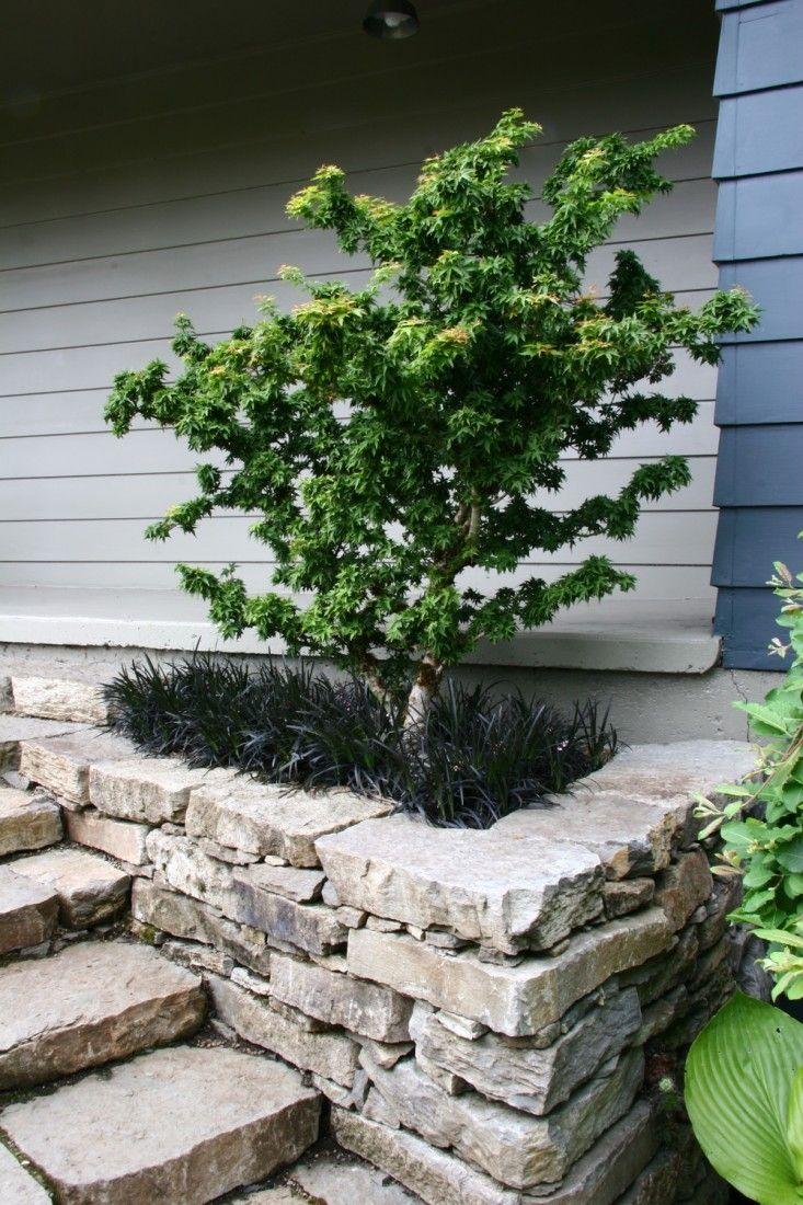 black mondo grass underplanting, stone retaining wall & steps