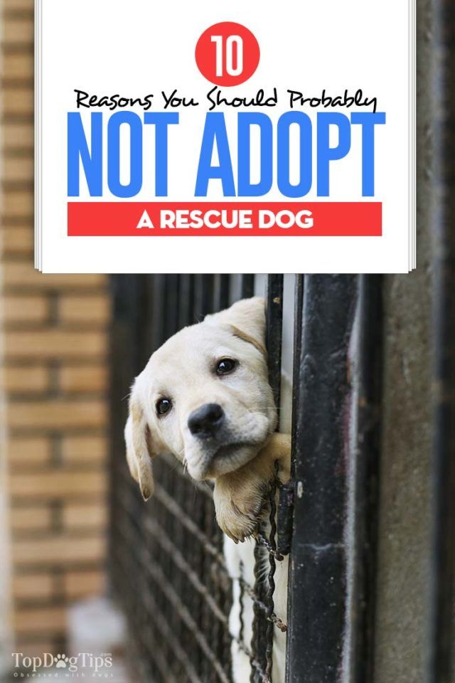 10 Reasons You Should Not Adopt A Rescue Dog Pets Rescue Dogs