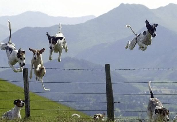 :-)Leap Years, Fly Dogs, Pets, The Hunting, Dogs Photos, Happy Dogs, Counting Sheep, Dogs Funny, Animal