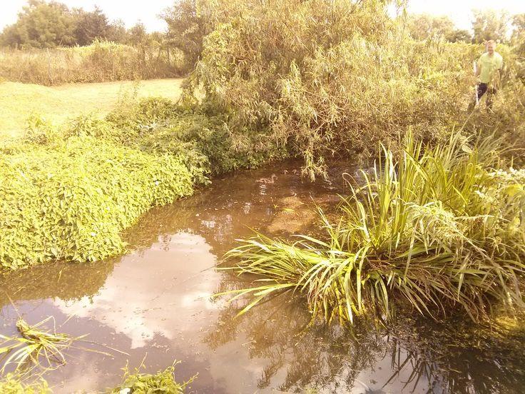Przydomowa oczyszczalnia ścieków to innowacyjna technologia, która dzięki naturalnym procesom biologicznym filtruje i uzdatnia wykorzystaną wcześniej wodę. #Ekopan