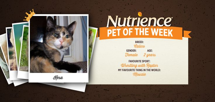 Kesa is one beautiful active #Nutrience Pet Of The Week! Submit your pet here:  http://bit.ly/PetOfWeek #pet #cat #cute