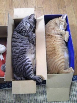 Cat beds - a matched set!