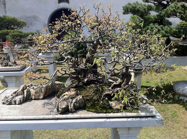 留園盆景7