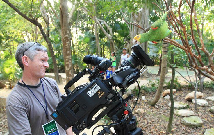 Como siempre Canal Once, presenta documentales muy destacados, y el próximo 6 de julio a las18:00 horas estrenará el documental..#TV #Documentales #Naturaleza #CanalOnce #Aves #Loros #Guacamayas