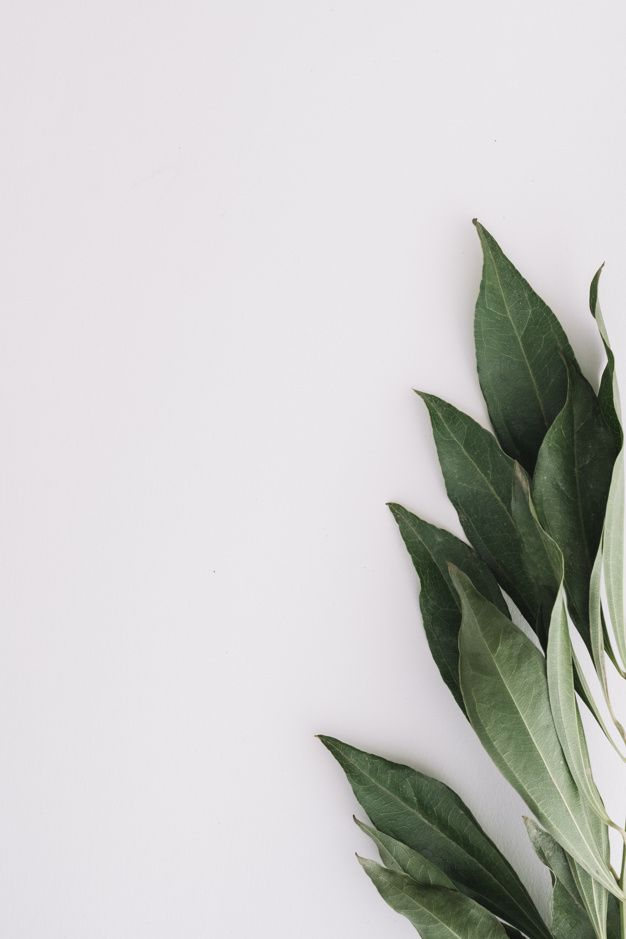 See more ideas about iphone wallpaper, wallpaper backgrounds, aesthetic iphone wallpaper. Gros Plan De Feuilles Vertes Sur Fond Blanc | White