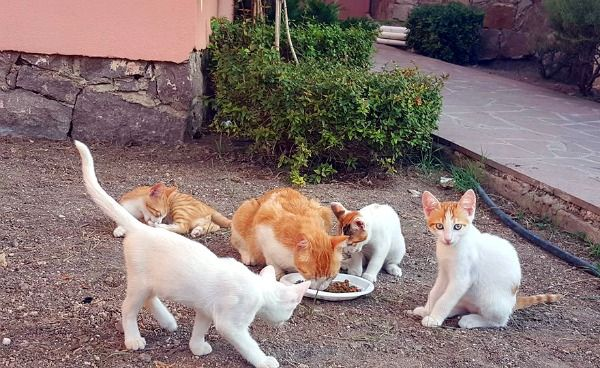Cats from the Sunrise Hotel in Eftalou, Lesbos