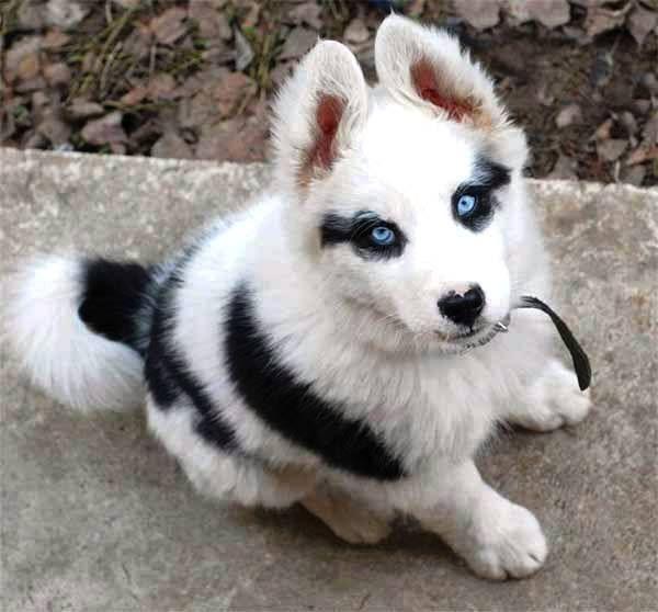 pelagem-cachorros-diferente-