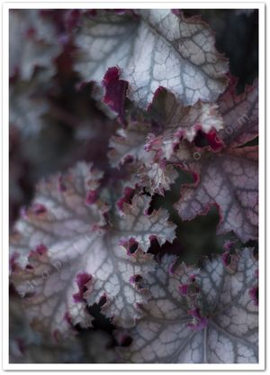 Purple Leaves  - from http://shop.florainspiro.com Photography by Emelie Ekborg