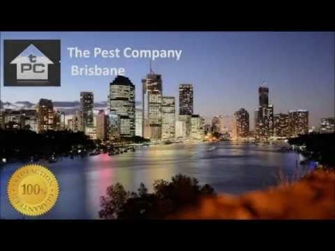 Termite Inspection and Barrier Specialists I The Pest Company Brisbane  The Pest Company Unit 3, 3245 Logan Road Underwood QLD 4119  Phone: 1300 552 234 Email: luke@thepestcompany.com.au Website: http://www.thepestcompanybrisbane.com.au