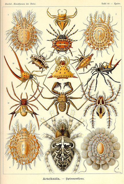 Ernst Haeckel- my sun would love have this...
