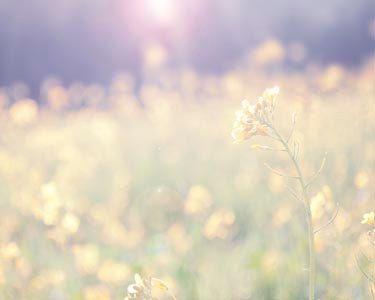 Fine Art Nature Spring Bloom- Boho Summer Travel Nature Photography Home Decor--Soft Morning Light  Yellow Green Purple