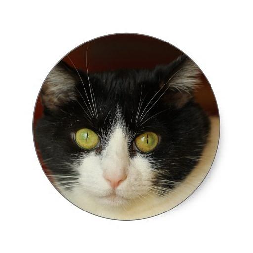 Cat Round Stickers