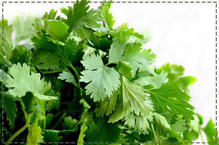 Chcesz zwiększyć swoją odporność domowymi sposobami? Postaw na aromatyczną pietruszkę – w 100 g zawiera ona ponad dwa razy więcej witaminy C niż cytryna. Dodawaj ją zatem do potraw i zielonych koktajli. Na nogi z pewnością postawi Cię koktajl z natki pietruszki, soku z cytryny, kiwi i kefiru.