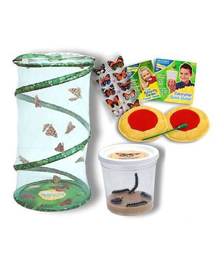 Insect Lore Live Butterfly Garden Gift Set | zulily